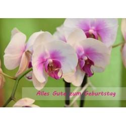 Orchideen grün Geburtstag