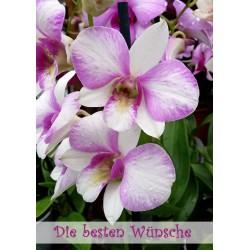 Besten Wünsche Orchidee