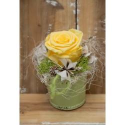 Gelbe Rose im Topf