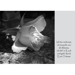 Trauer Rose