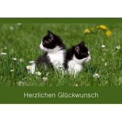 Herzlichen Glückwunsch zwei Katzen