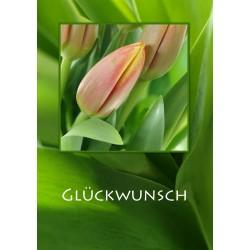 Tulpen Glückwunsch
