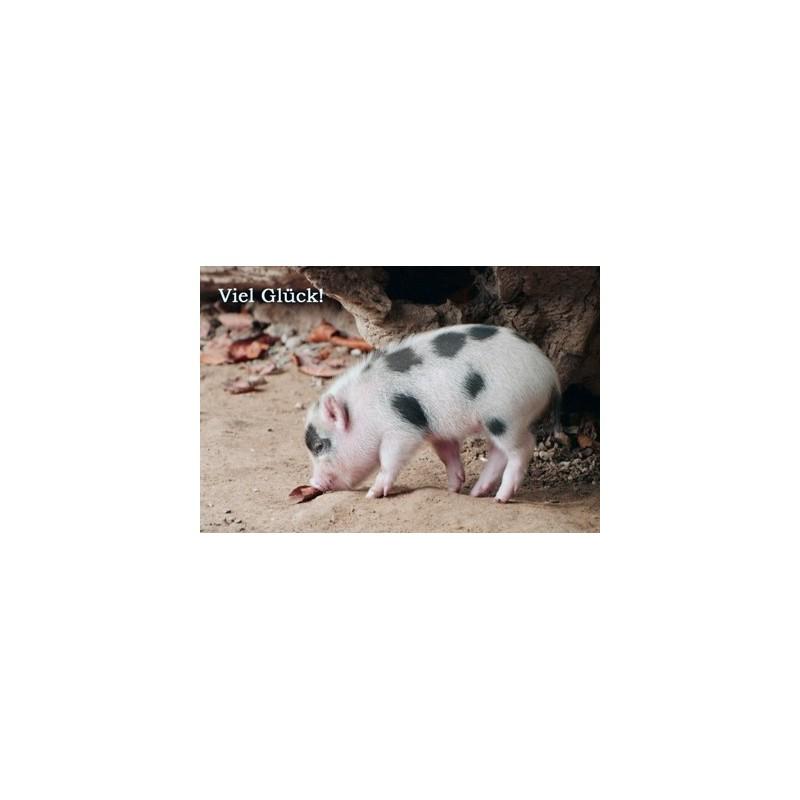 Viel Glück mit Schwein
