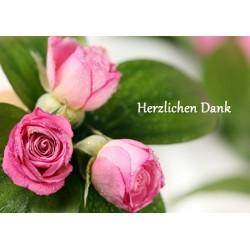 Danke rosa Rose